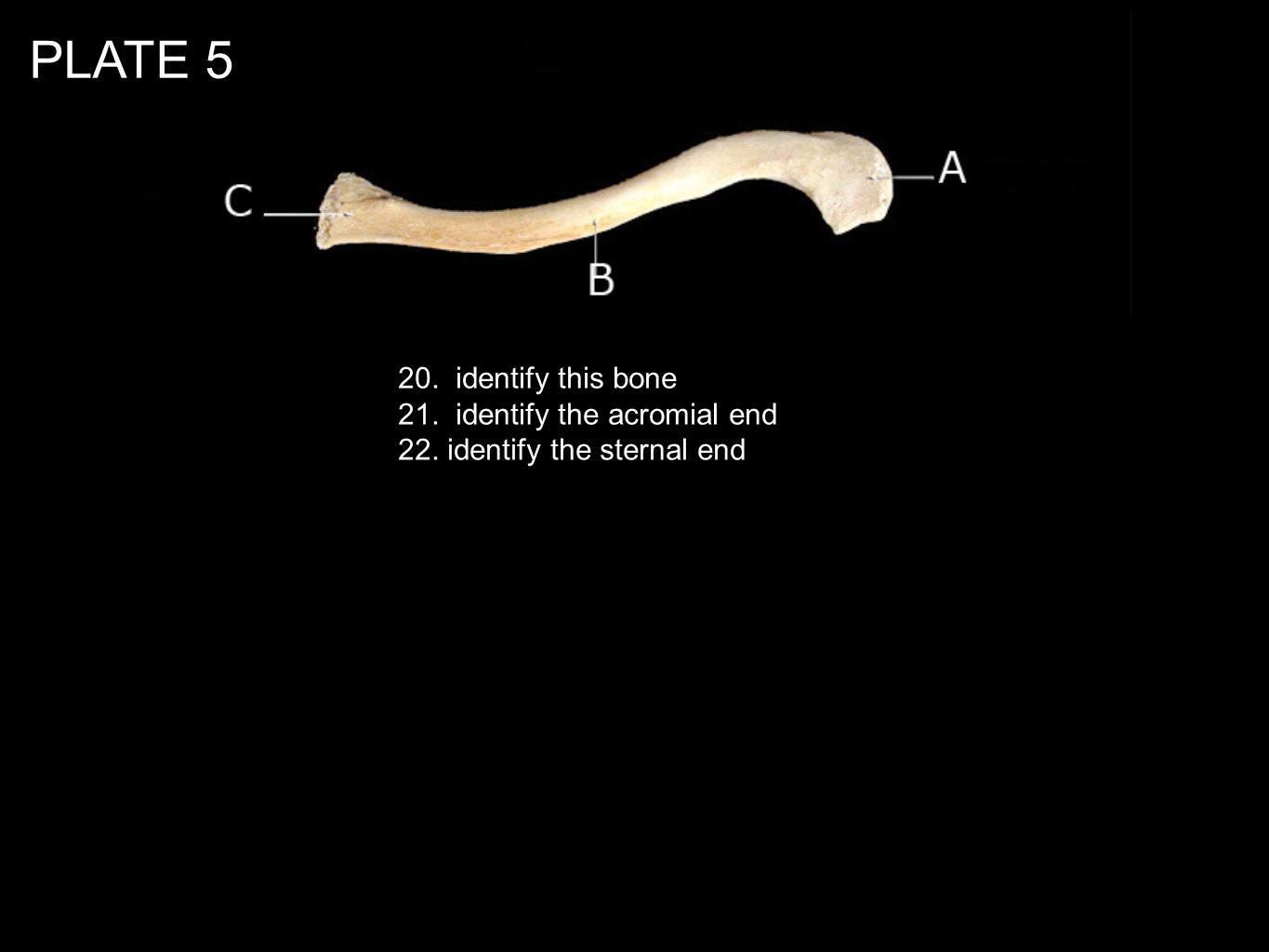 PLATE 5 20. identify this bone 21. identify the acromial end