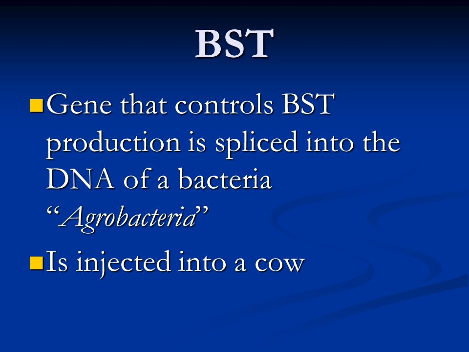 BST Gene that controls BST production is spliced into the DNA of a bacteria Agrobacteria Is injected into a cow.