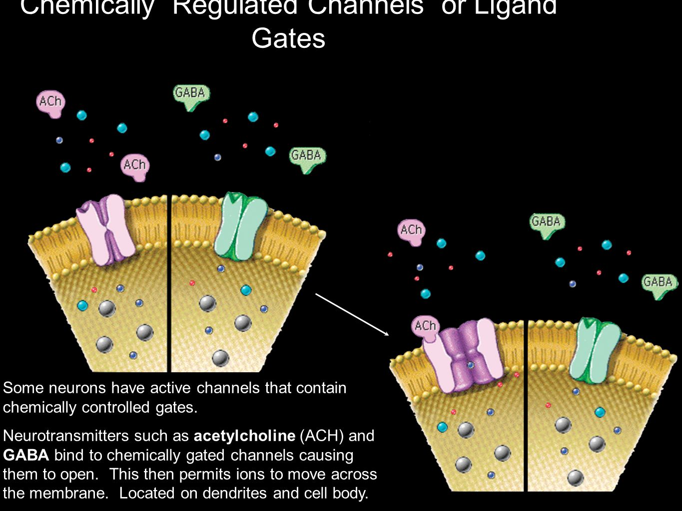 Chemically Regulated Channels or Ligand Gates