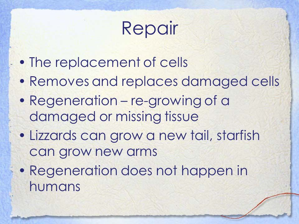 Repair The replacement of cells Removes and replaces damaged cells