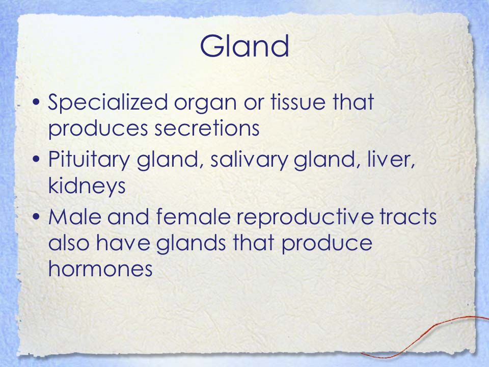 Gland Specialized organ or tissue that produces secretions