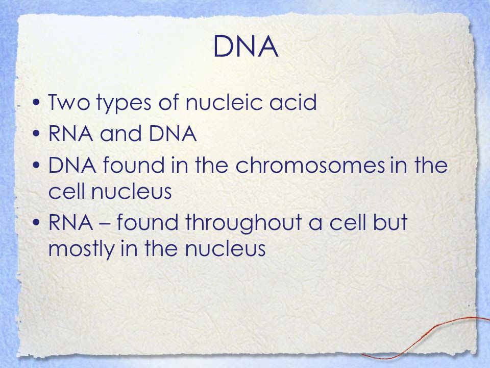 DNA Two types of nucleic acid RNA and DNA