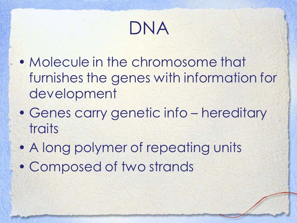 DNA Molecule in the chromosome that furnishes the genes with information for development. Genes carry genetic info – hereditary traits.