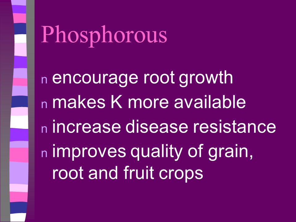 Phosphorous encourage root growth makes K more available