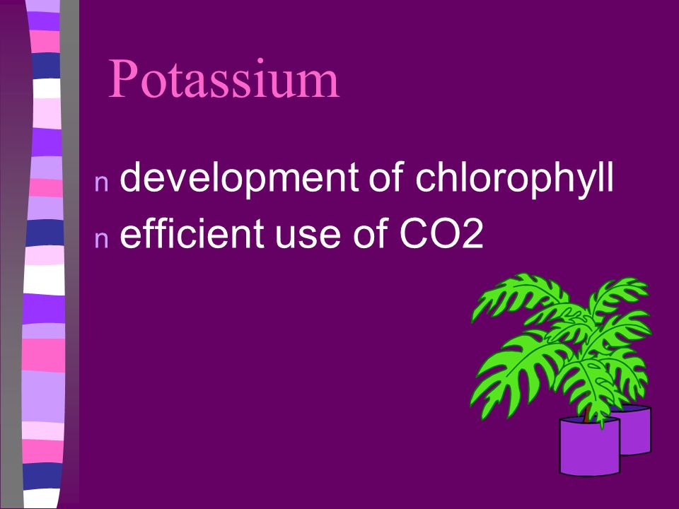 Potassium development of chlorophyll efficient use of CO2