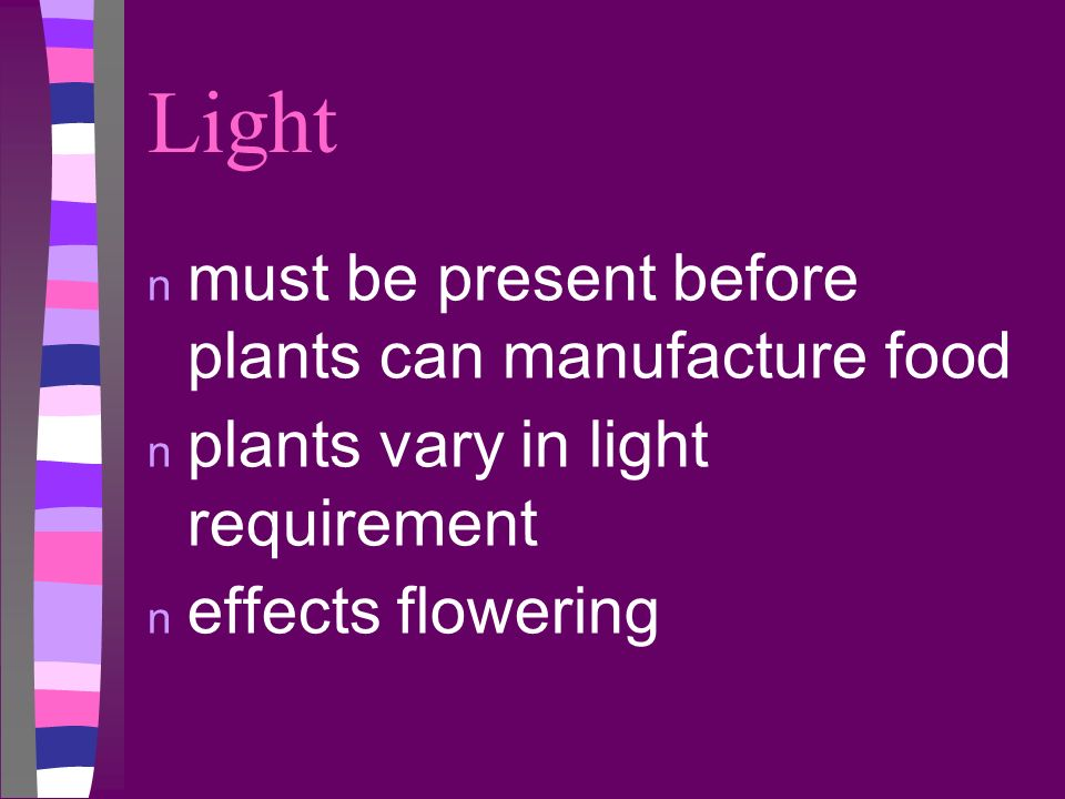 Light must be present before plants can manufacture food