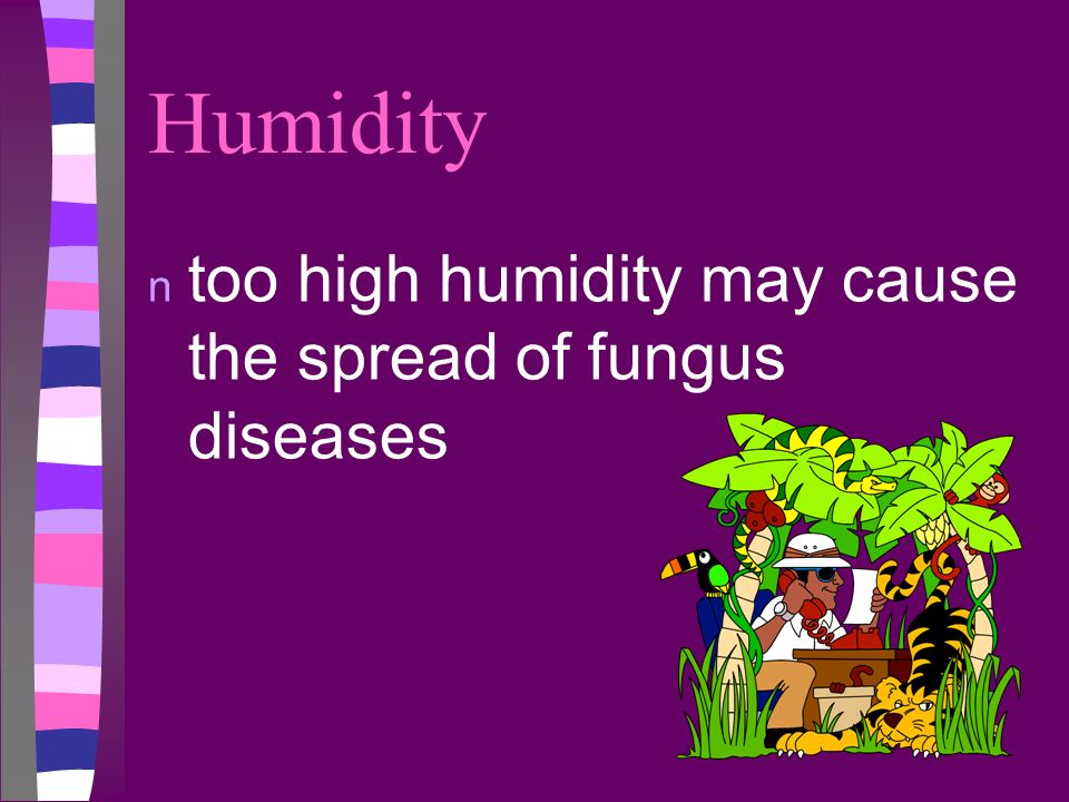 Humidity too high humidity may cause the spread of fungus diseases