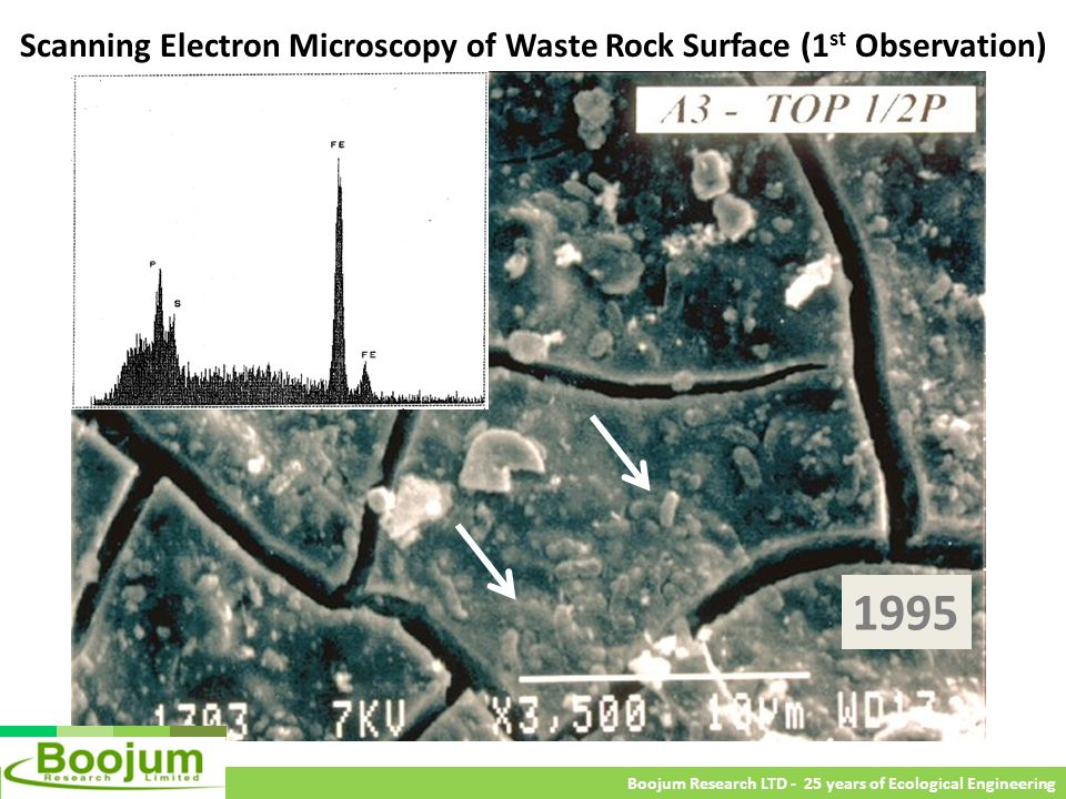 Scanning Electron Microscopy of Waste Rock Surface (1st Observation)