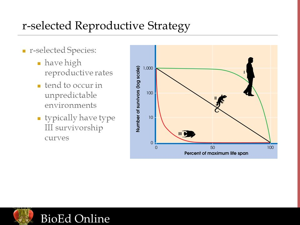 r-selected Reproductive Strategy