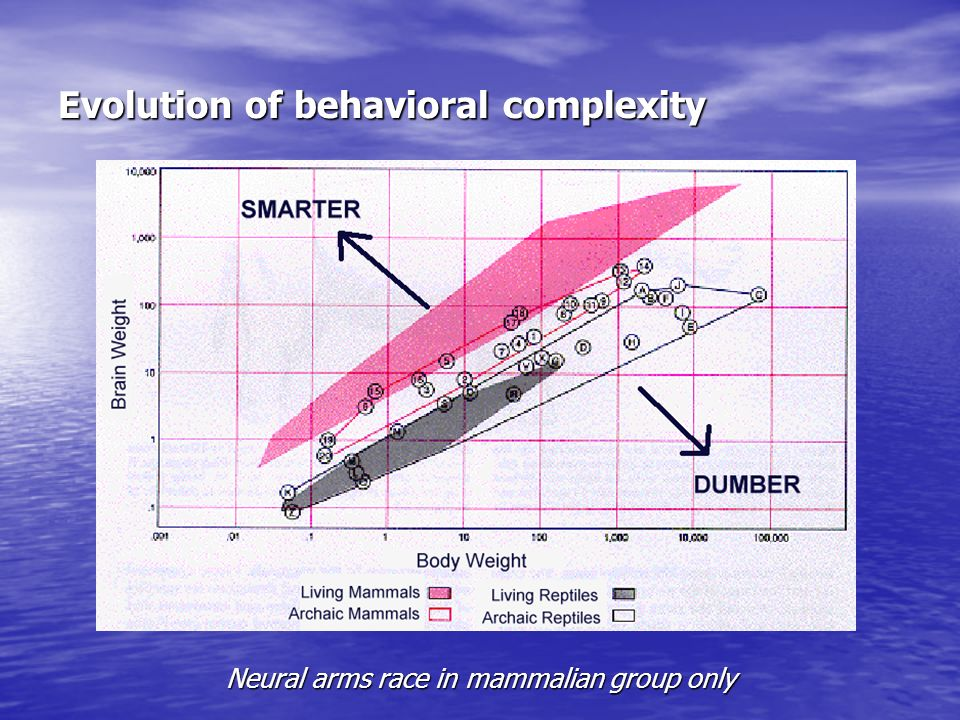 Evolution of behavioral complexity