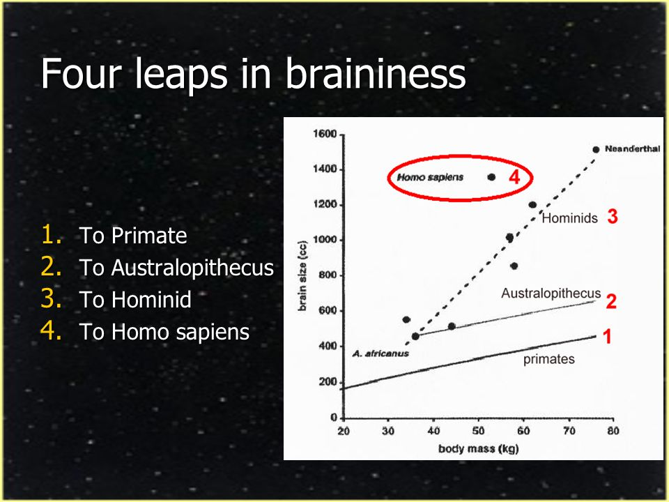 Four leaps in braininess