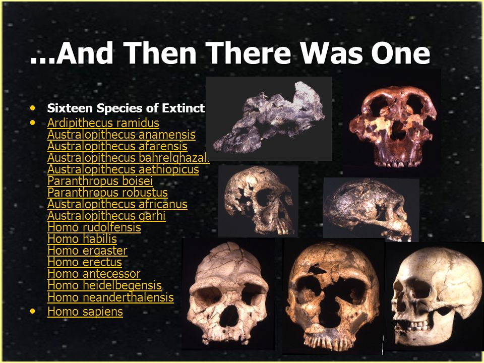 ...And Then There Was One Sixteen Species of Extinct Humans