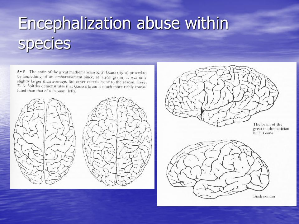 Encephalization abuse within species