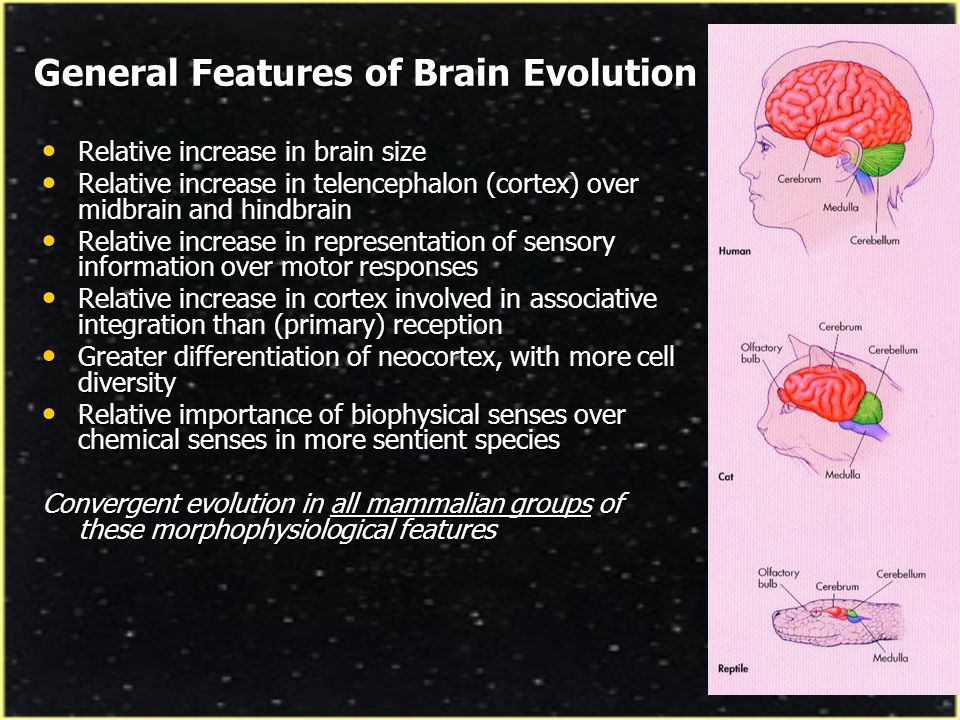 General Features of Brain Evolution