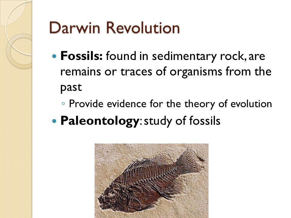 Darwin Revolution Fossils: found in sedimentary rock, are remains or traces of organisms from the past.