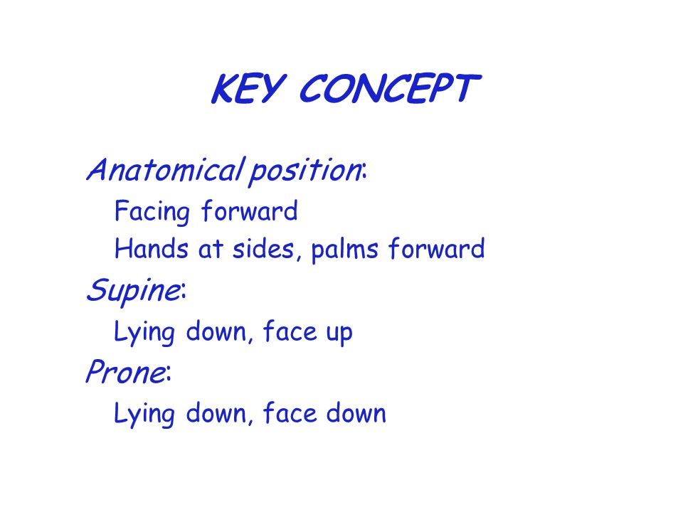 KEY CONCEPT Anatomical position: Supine: Prone: Facing forward