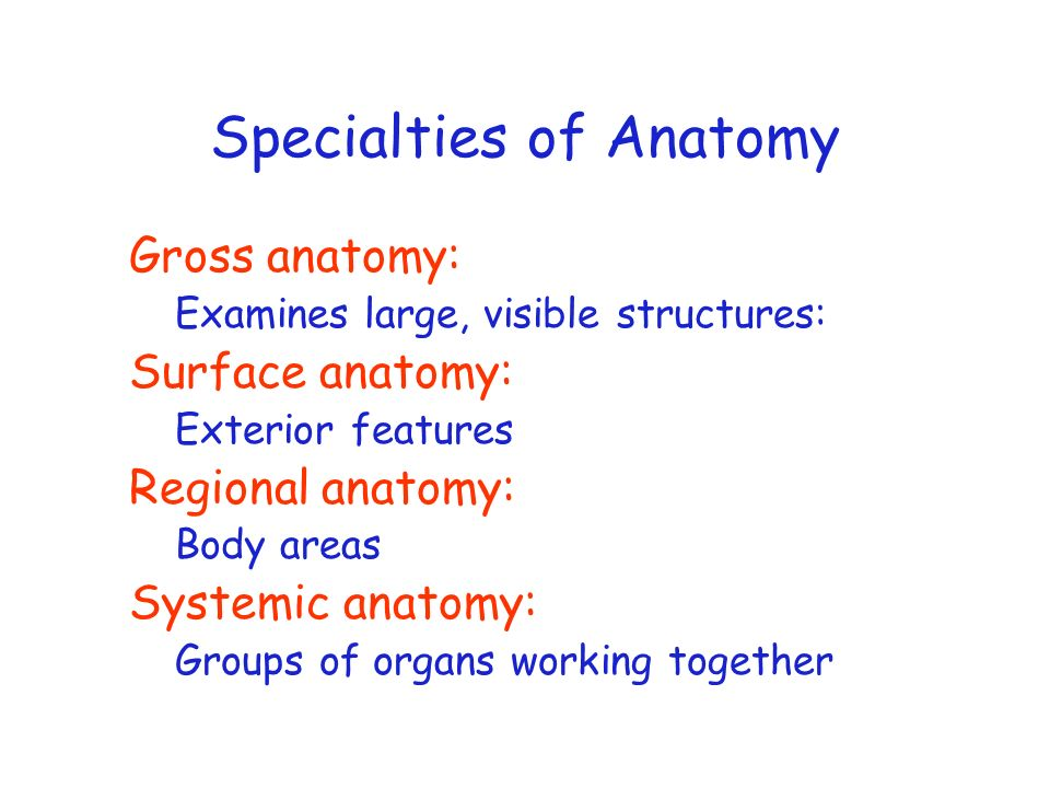 Specialties of Anatomy