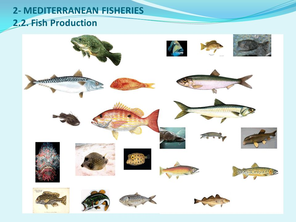 2- MEDITERRANEAN FISHERIES 2.2. Fish Production