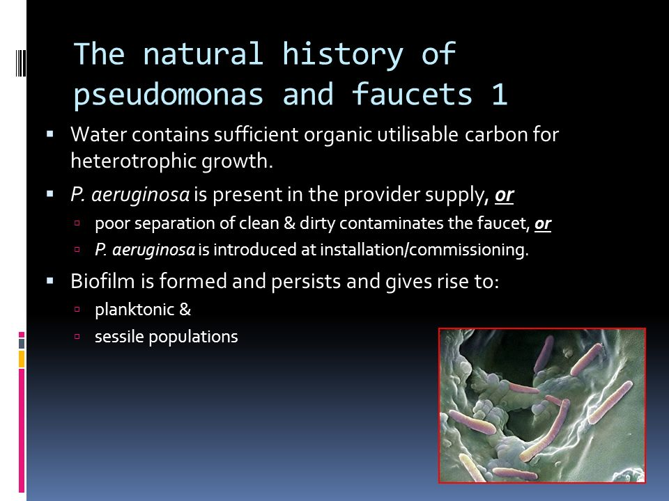 The natural history of pseudomonas and faucets 1