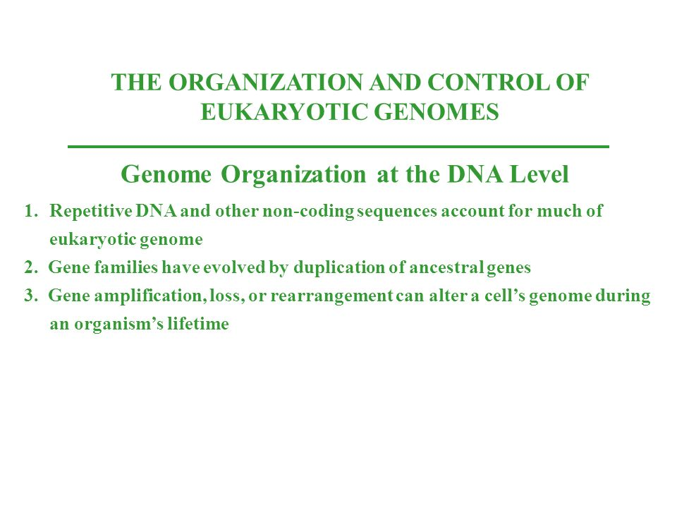 Genome Organization at the DNA Level
