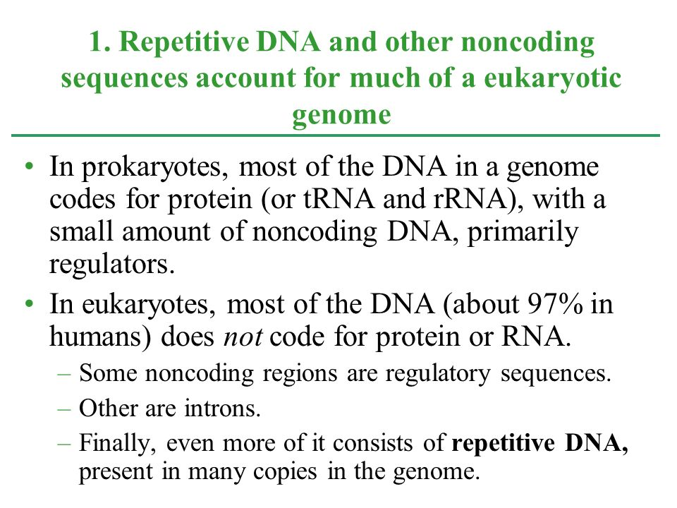 1. Repetitive DNA and other noncoding sequences account for much of a eukaryotic genome