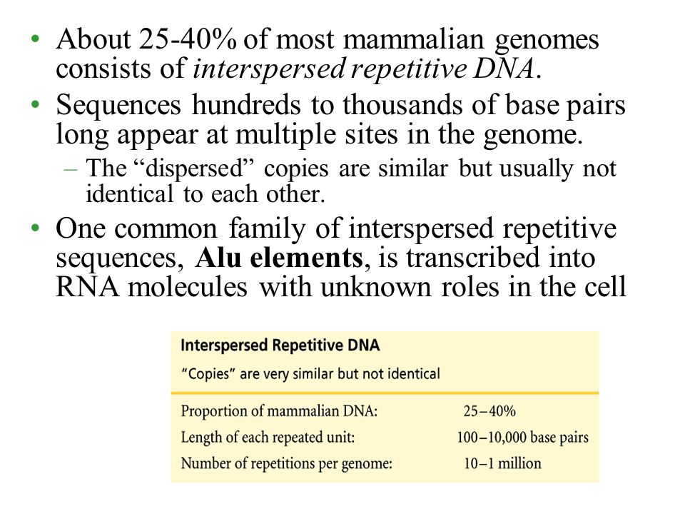 About 25-40% of most mammalian genomes consists of interspersed repetitive DNA.