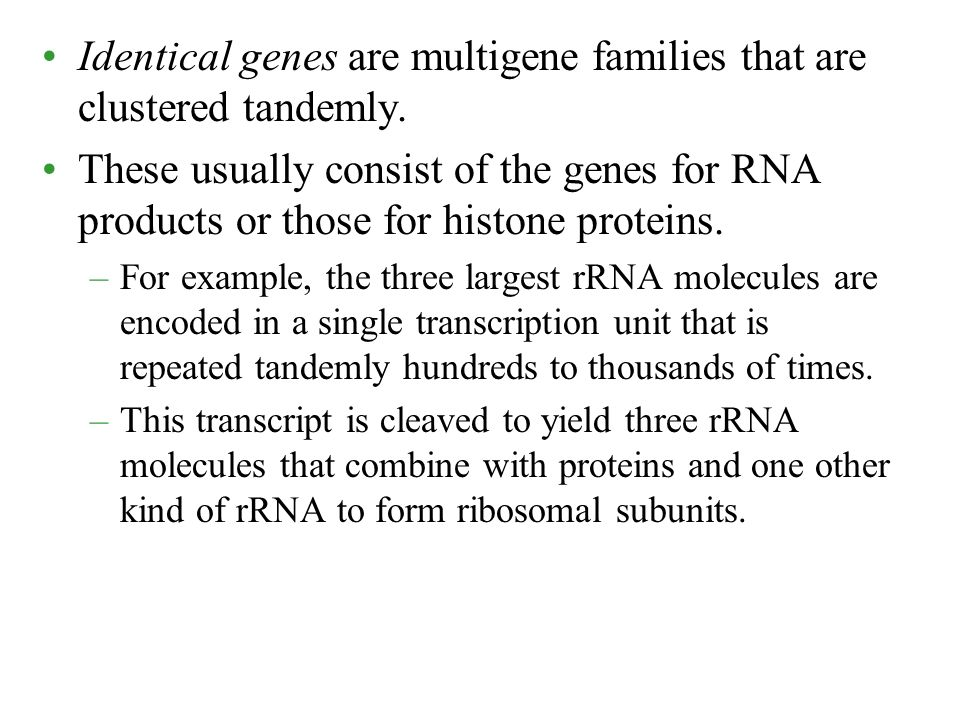 Identical genes are multigene families that are clustered tandemly.