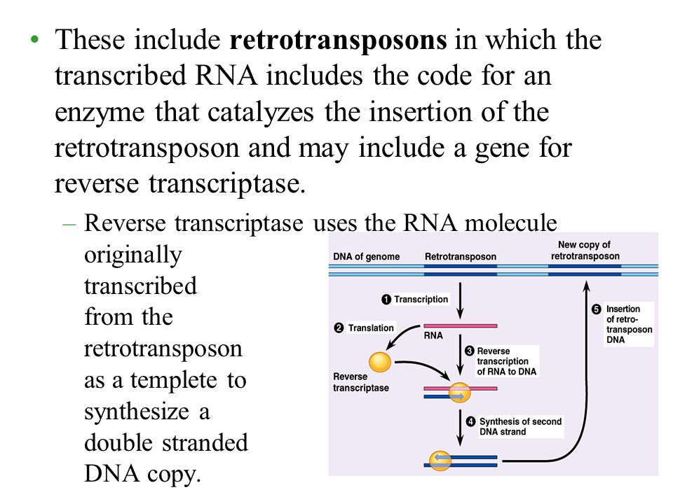 These include retrotransposons in which the transcribed RNA includes the code for an enzyme that catalyzes the insertion of the retrotransposon and may include a gene for reverse transcriptase.