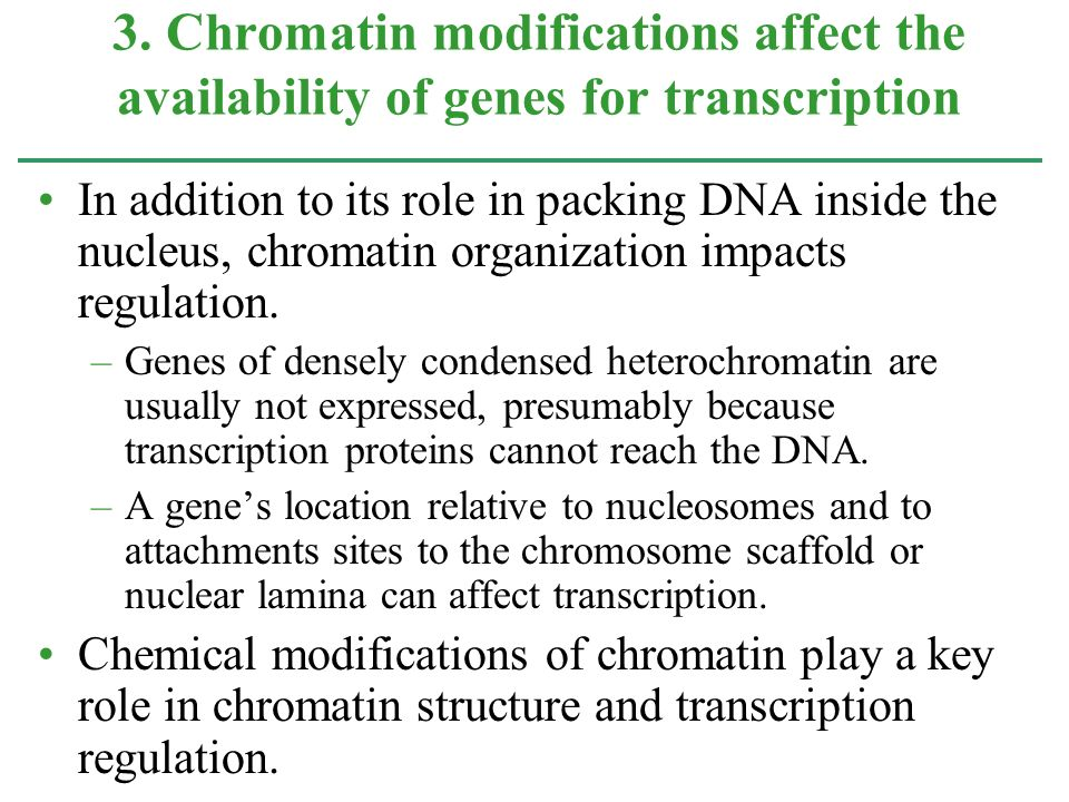 3. Chromatin modifications affect the availability of genes for transcription