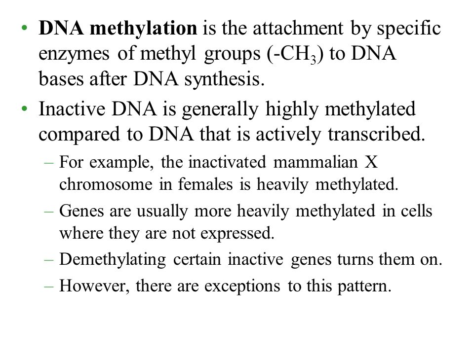 DNA methylation is the attachment by specific enzymes of methyl groups (-CH3) to DNA bases after DNA synthesis.