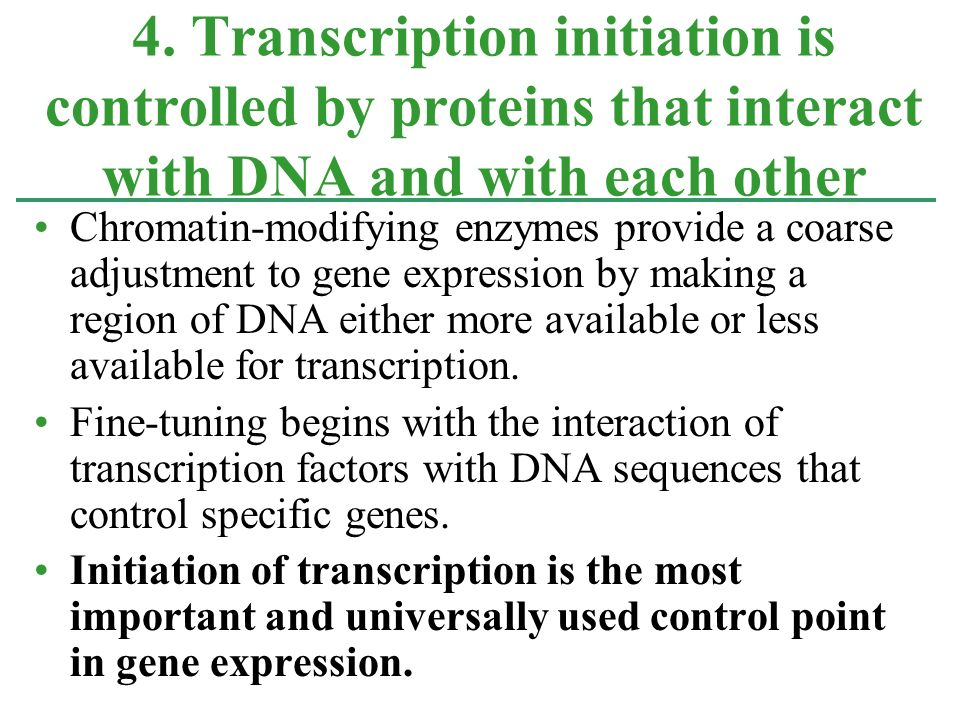 4. Transcription initiation is controlled by proteins that interact with DNA and with each other