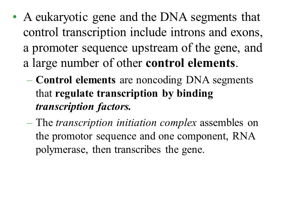 A eukaryotic gene and the DNA segments that control transcription include introns and exons, a promoter sequence upstream of the gene, and a large number of other control elements.