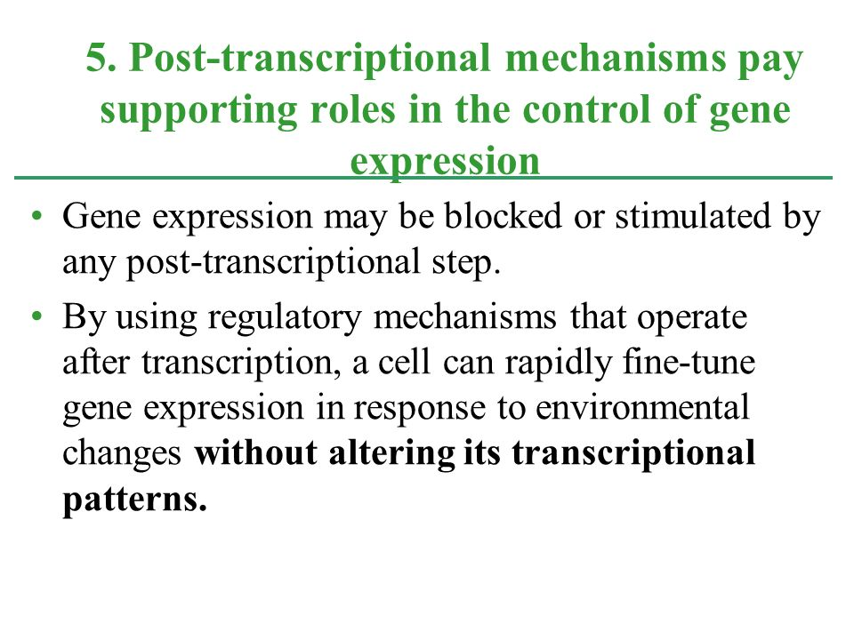 5. Post-transcriptional mechanisms pay supporting roles in the control of gene expression