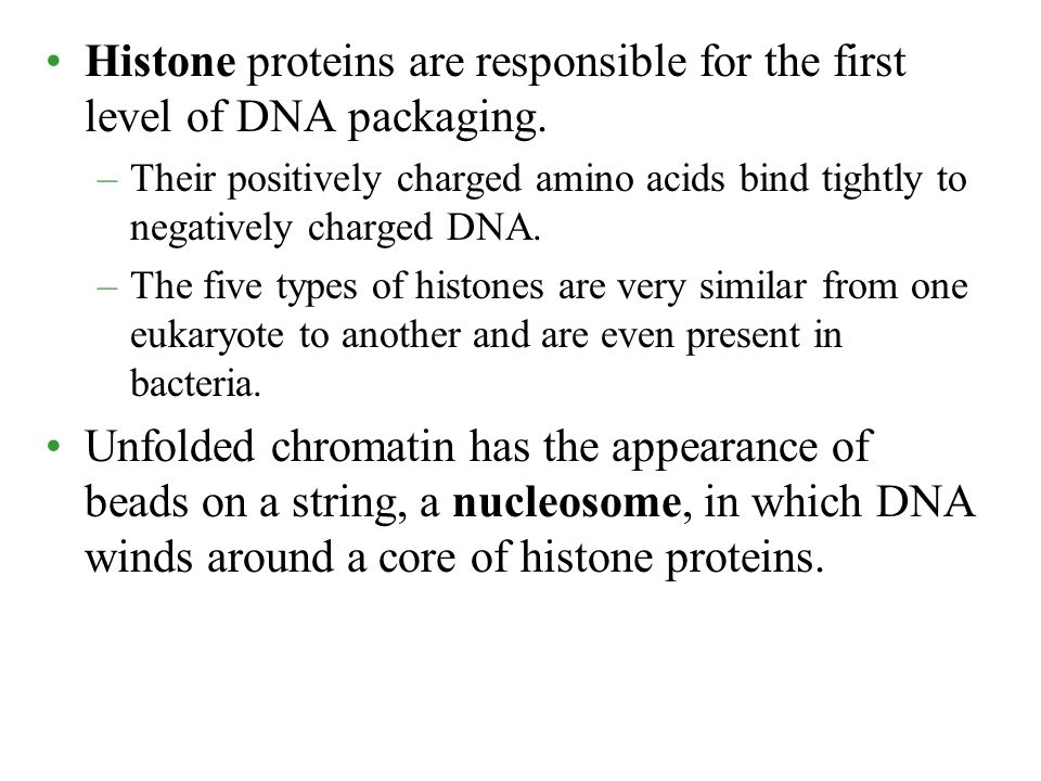 Histone proteins are responsible for the first level of DNA packaging.