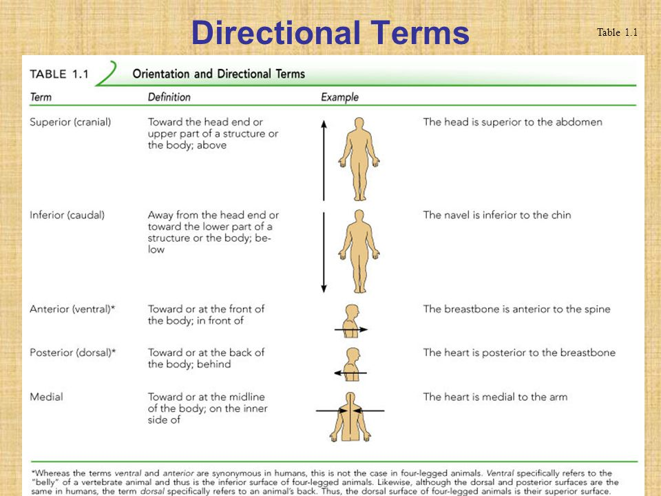 Table 12 Directional Terms Diagram - Free Car Wiring Diagrams •