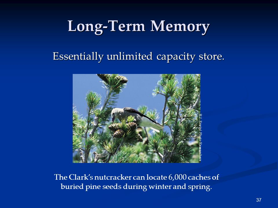 Long-Term Memory Essentially unlimited capacity store.