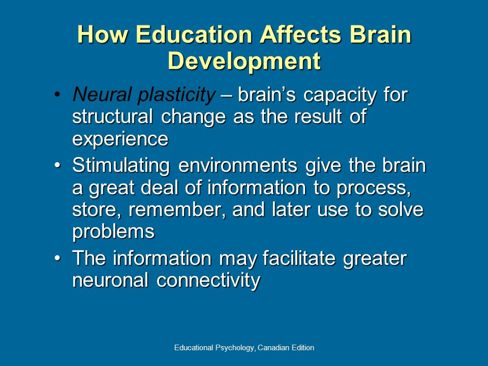 How Education Affects Brain Development
