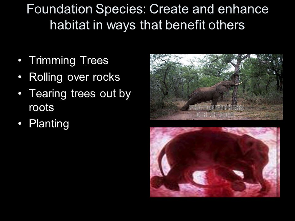Foundation Species: Create and enhance habitat in ways that benefit others