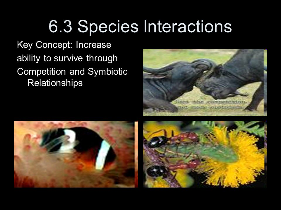 6.3 Species Interactions Key Concept: Increase ability to survive through Competition and Symbiotic Relationships