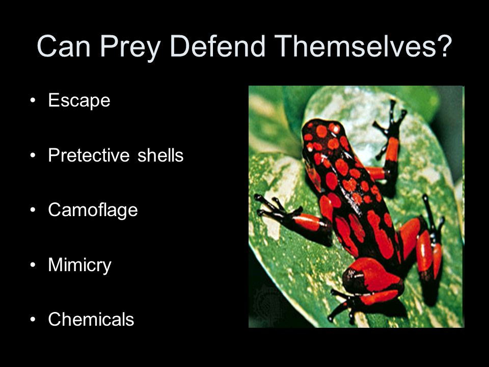 Can Prey Defend Themselves