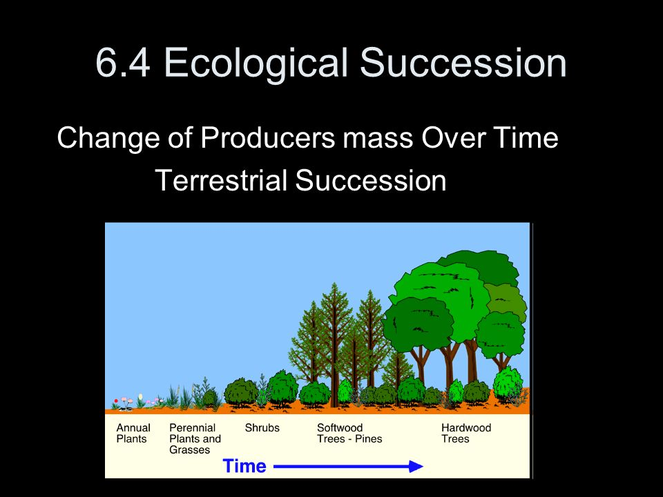 6.4 Ecological Succession