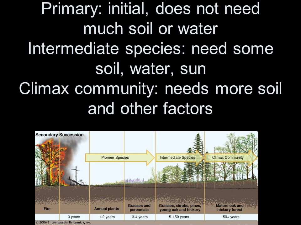 From Pioneer Species to Intermediate Species, to a Climax Community Primary: initial, does not need much soil or water Intermediate species: need some soil, water, sun Climax community: needs more soil and other factors