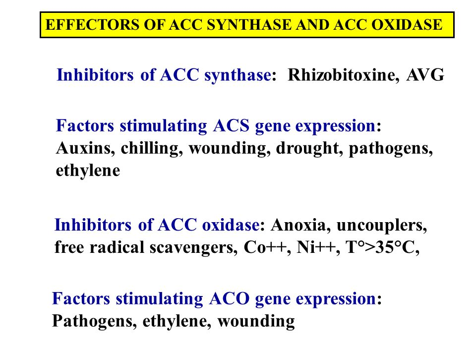 Inhibitors of ACC synthase: Rhizobitoxine, AVG