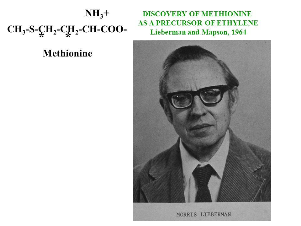 DISCOVERY OF METHIONINE AS A PRECURSOR OF ETHYLENE