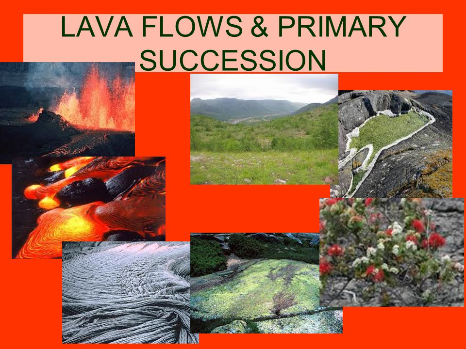 LAVA FLOWS & PRIMARY SUCCESSION