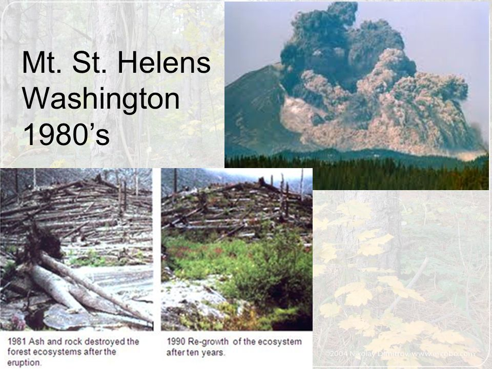 Mt. St. Helens Washington 1980's