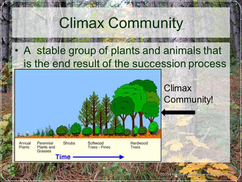 Climax Community Biology