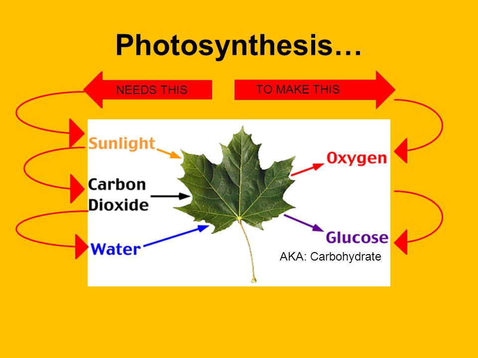 Photosynthesis… NEEDS THIS TO MAKE THIS AKA: Carbohydrate