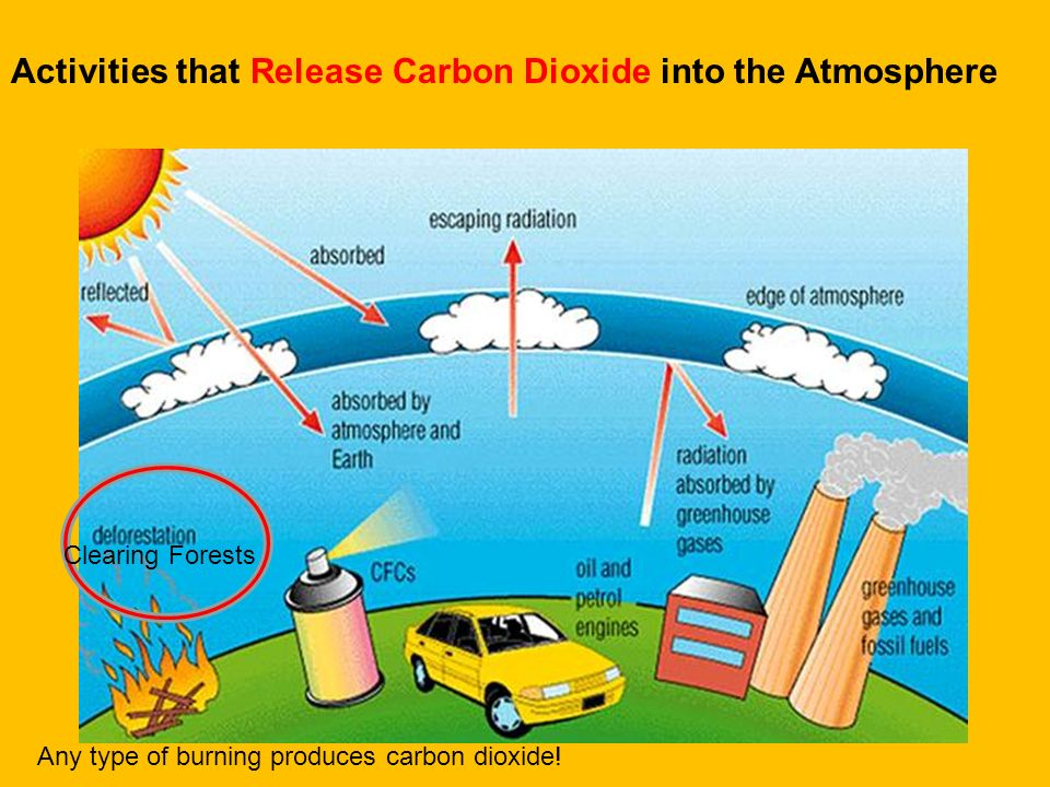 Activities that Release Carbon Dioxide into the Atmosphere
