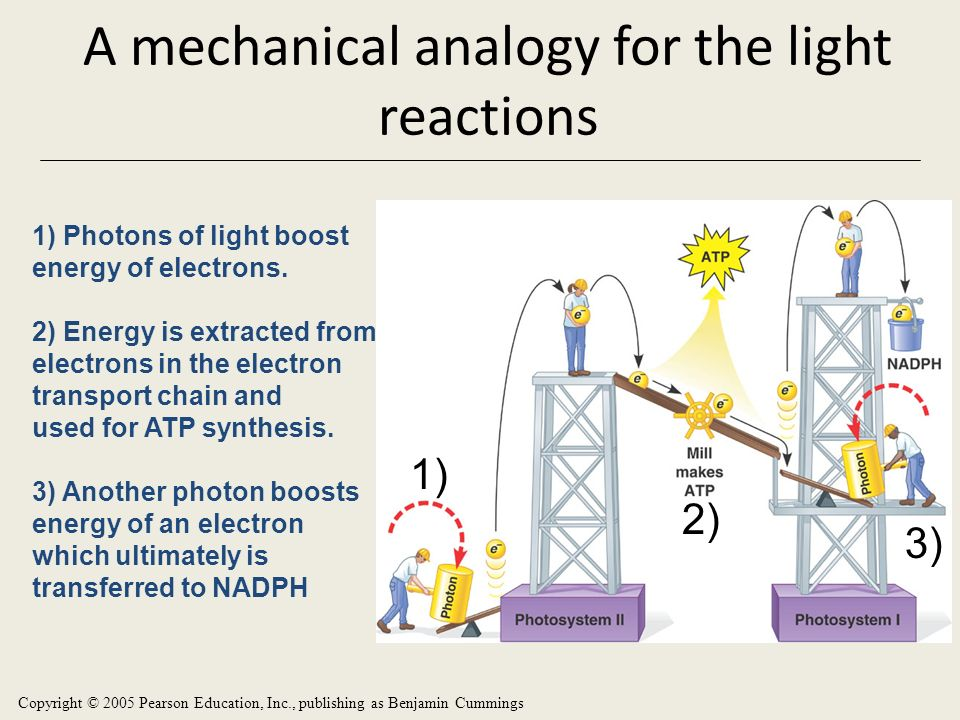 A mechanical analogy for the light reactions